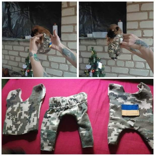 Спартанець - військовий пес