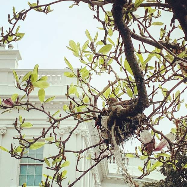 Сади біля Білого дому