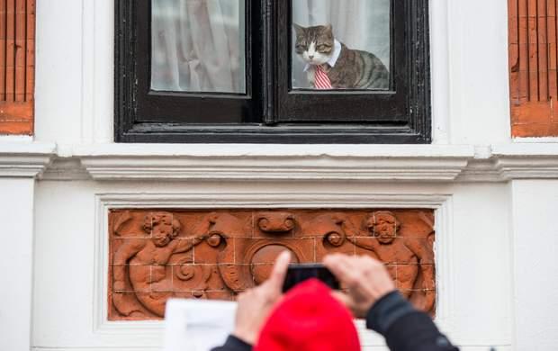 Ассанж Джуліан Ассанж кіт
