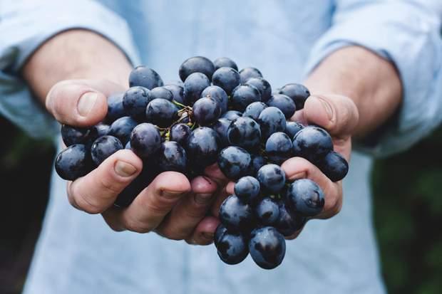 Темні сорти винограду зменшують запалення