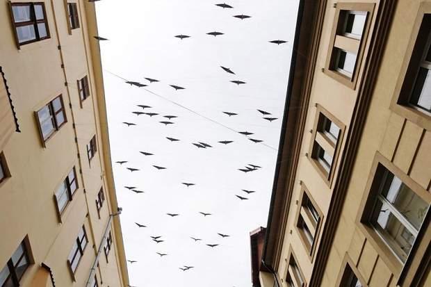івано франківськ птахи