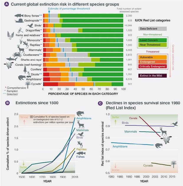 Інфографіка масового вимирання тварин та живих організмів
