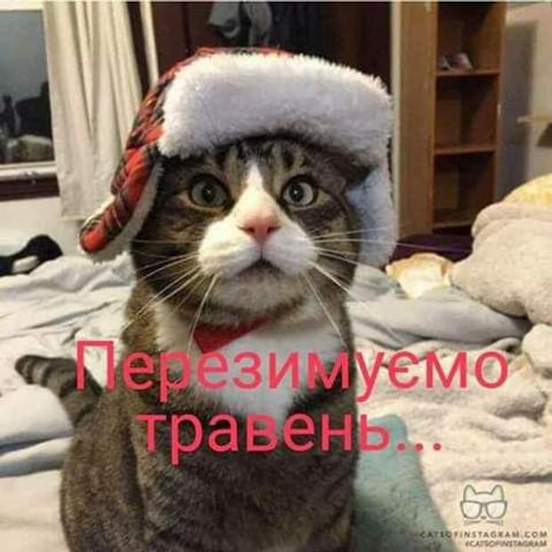 зима травень Карпати меми
