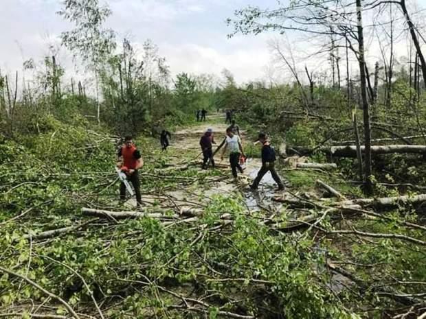 Буревій смерч негода Житомирська область знесло ліс