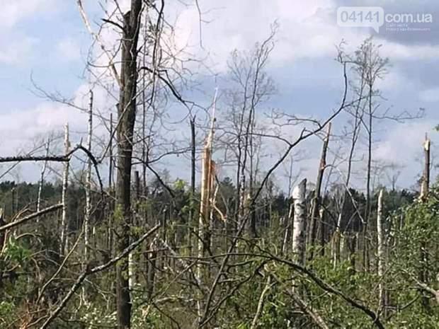 негода Житомир буревій повінь ліс дерева