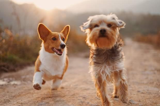 Вчені змогли знайти в ДНК ген, який відповідає за любов до собак