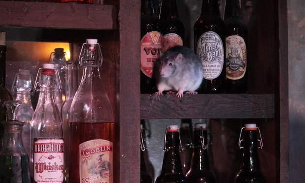 сша бар щурі