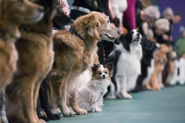 Виставка собак в Одесі