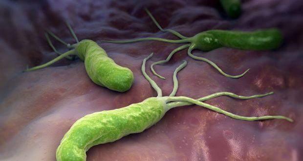 Helicobacter pylori – найпоширеніша бактерія