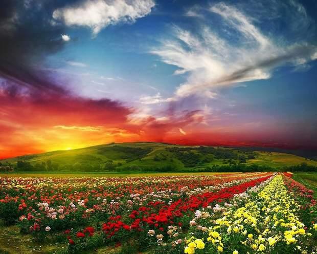 долина троянд болгарія