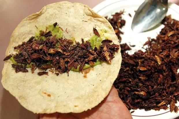 страва з комах