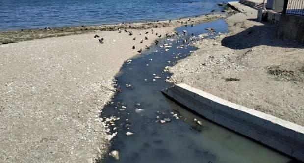 Жители Феодосии просят оккупантов закрыть центральный пляж, в который реками сливают бытовые отходы и стоки канализации