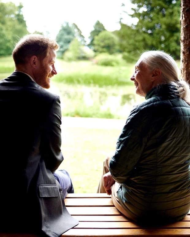 Принц Гаррі під час інтерв'ю з приматологом