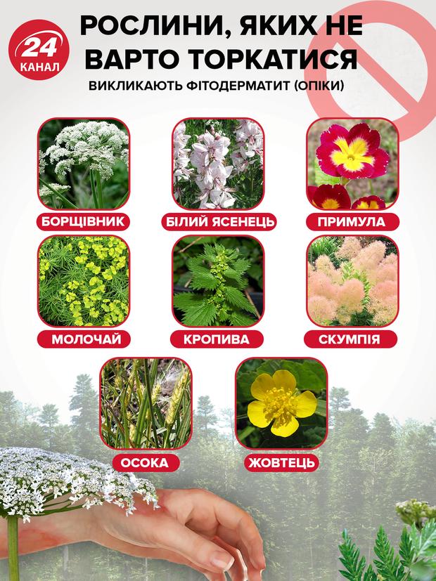 Рослини, які викликають алергію