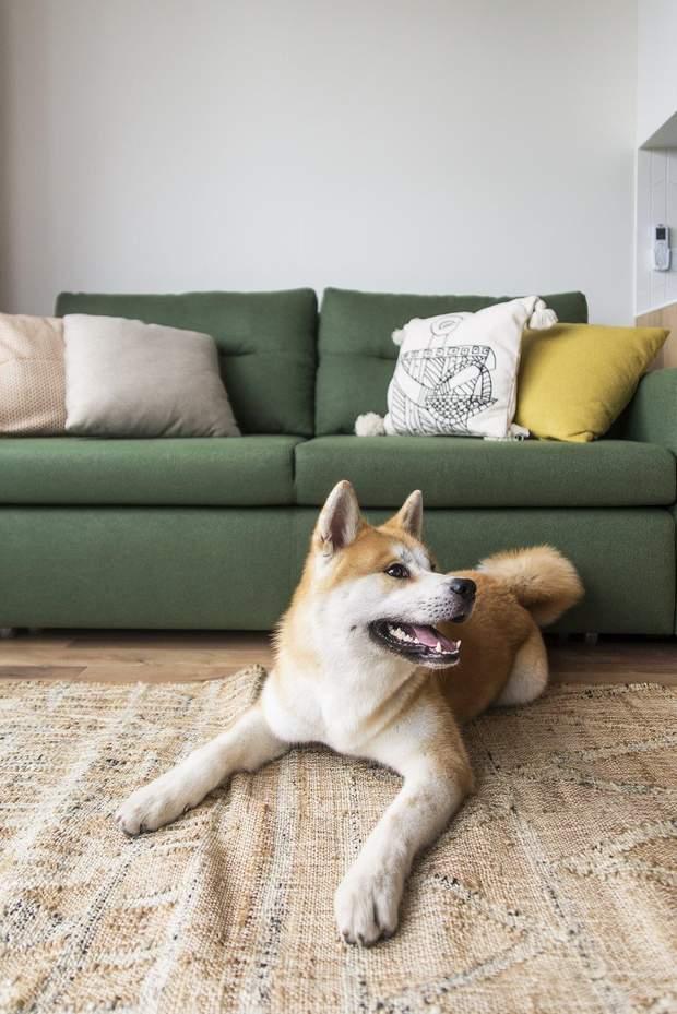 квартира дизайн інтерєр диван