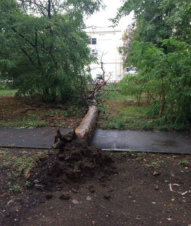 дерево Дніпро