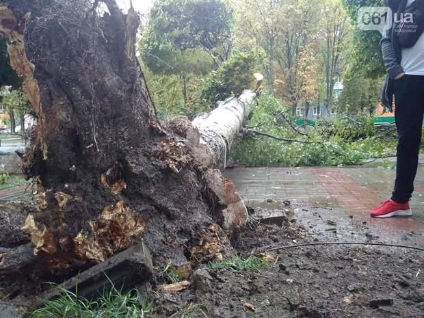 дерева повалені негода