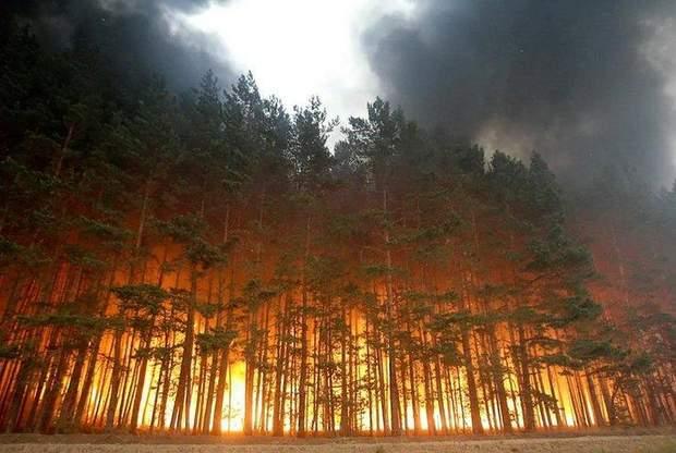 Пожежі в Сибіру: горять 119 тисяч гектарів лісу