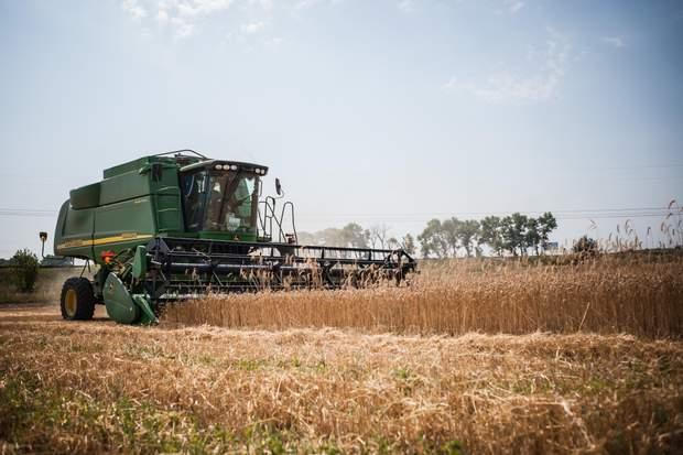 збір врожаю, зерно, пшениця