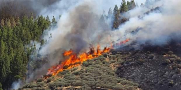 Ліси Гран-Канарія пожежа