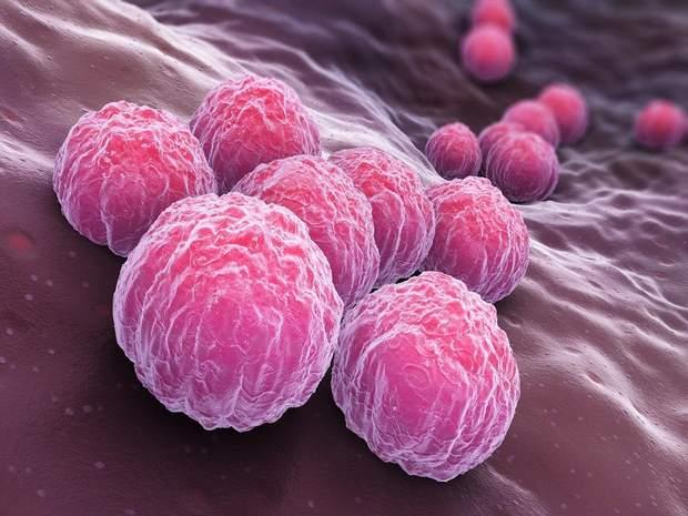 Бактерії Chlamydia trachomatis