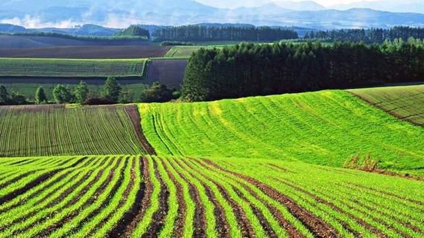 Россияне не станут скупать землю в Украине