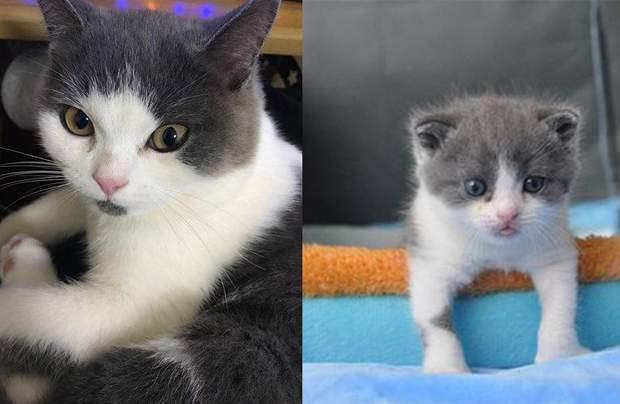 Клоноване кошеня в Китаї