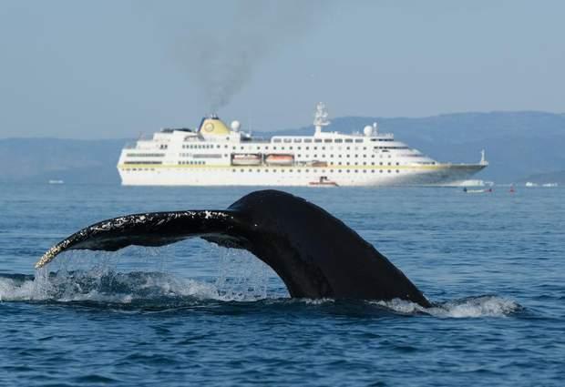 Гренландія корабель кит