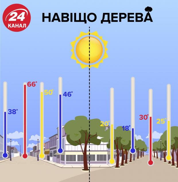 дерева охолоджують вулиці інфографіка