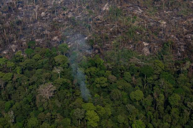 пожежа Амазонка Амазонія тропічний ліс