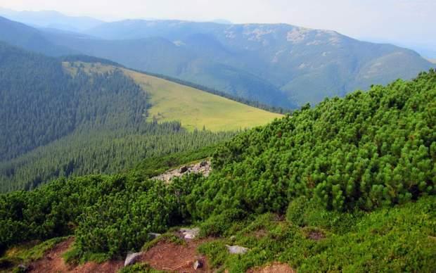 Літні Карпати, українські гори