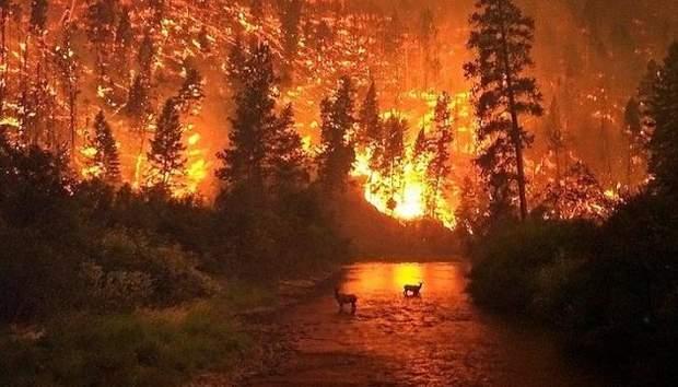 Пожежі у Сибіру, зміни клімату