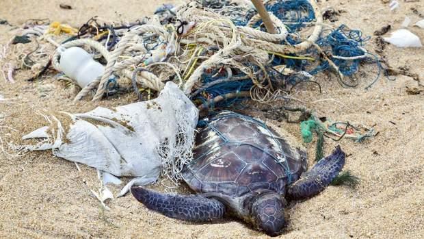 Через сміття гинуть тварини