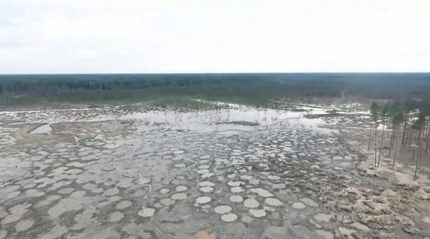 Ліс Житомира