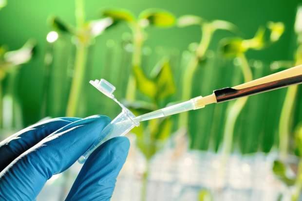 ГМО в Україні