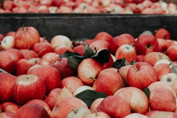 Які продукти ГМО є на ринку