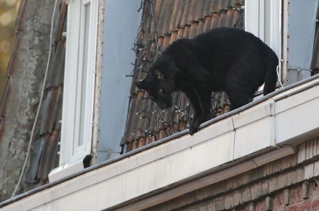 пантера франція курйози