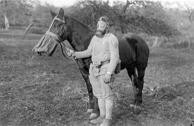 коні перша світова