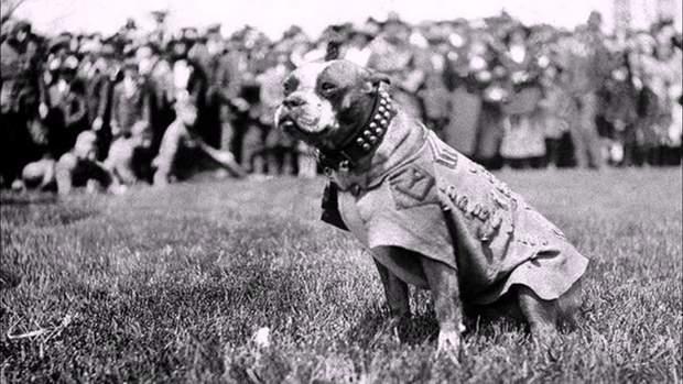 війна собаки тварини на війні