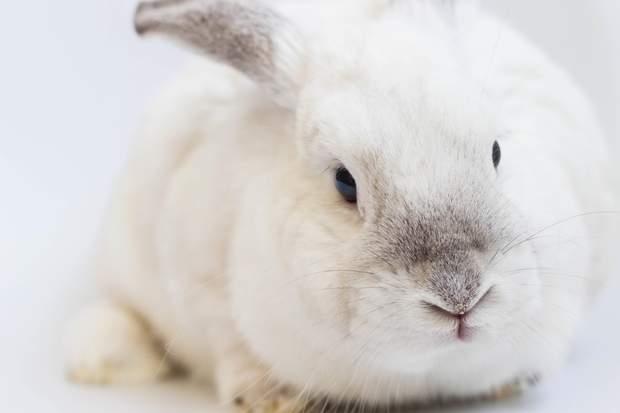 Досліди на кроликах показали, що оргазм потрібен жінкам для овуляції