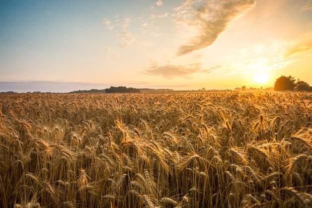 У перспективі продаж землі принесе прибуток