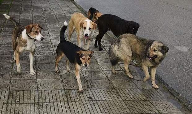 безпритульні тварини сказ вакцинація