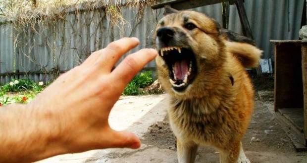 сказ вакцина собаки
