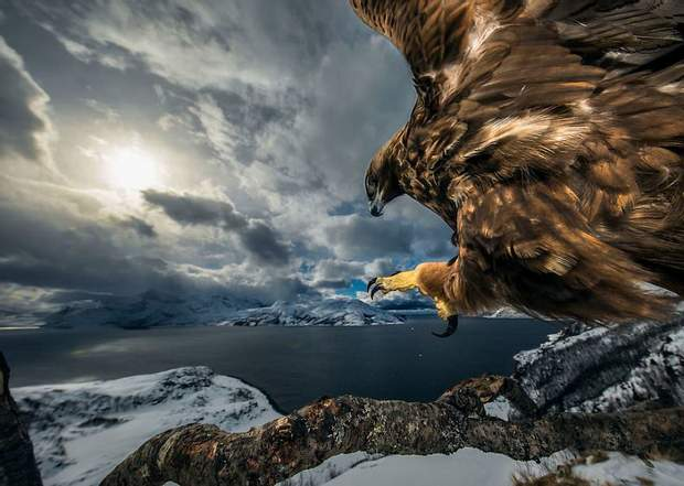 ​Wildlife Photographer of the Year