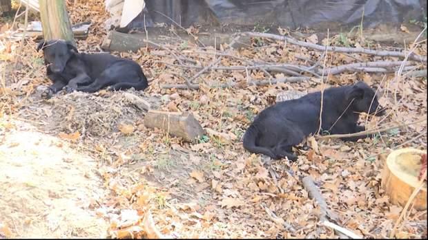 Собаки, які допомагають військовим на Донбасі