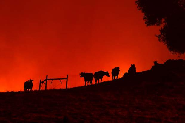 Пожежа охопила Каліфорнію