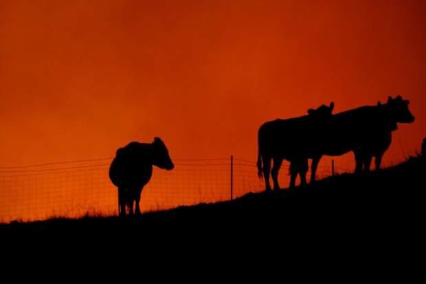 Людей з найближчих міст евакуйовують, вогонь впритул добрався до людських помешкань та господарств