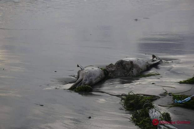 дельфін мертвий одещина пляж