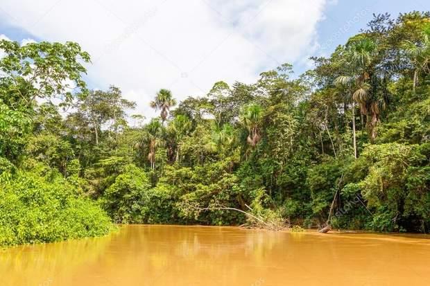 Ліси Амазонки