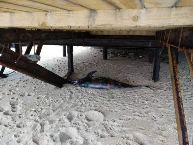 Мервий дельфін, Одеса пляж, надзвичайні ситуації